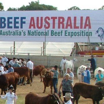 Cattle Beef Australia