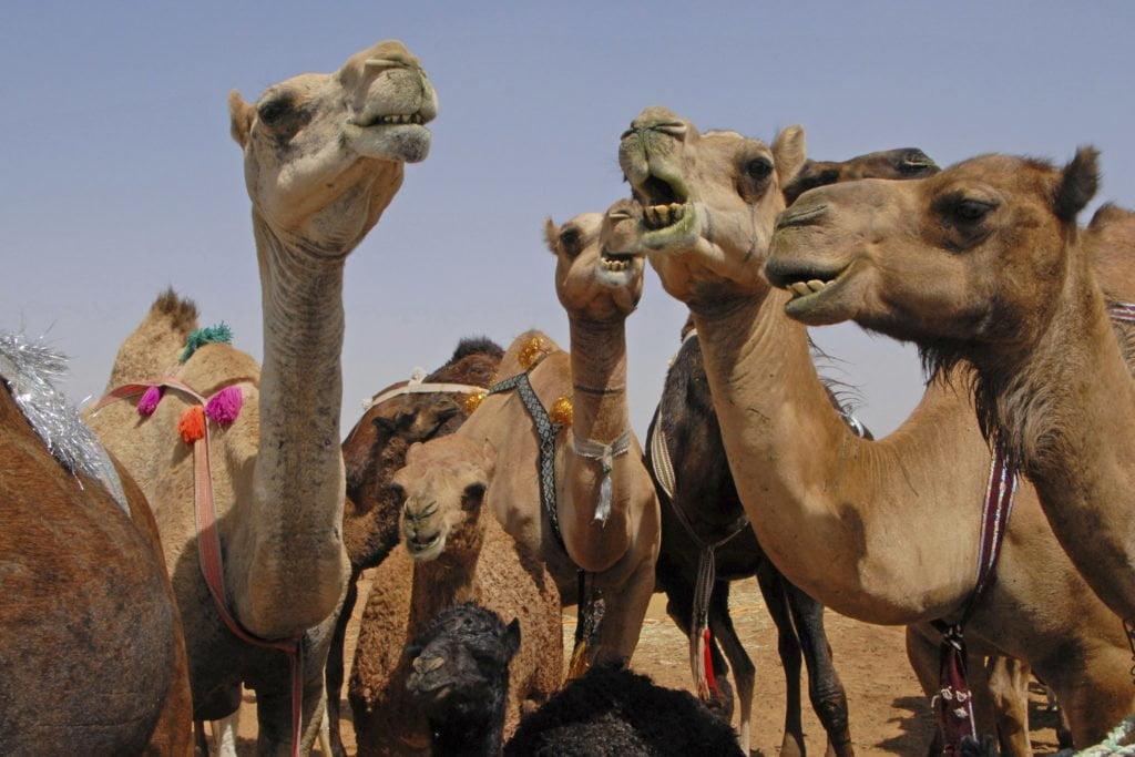 Arab dating australia
