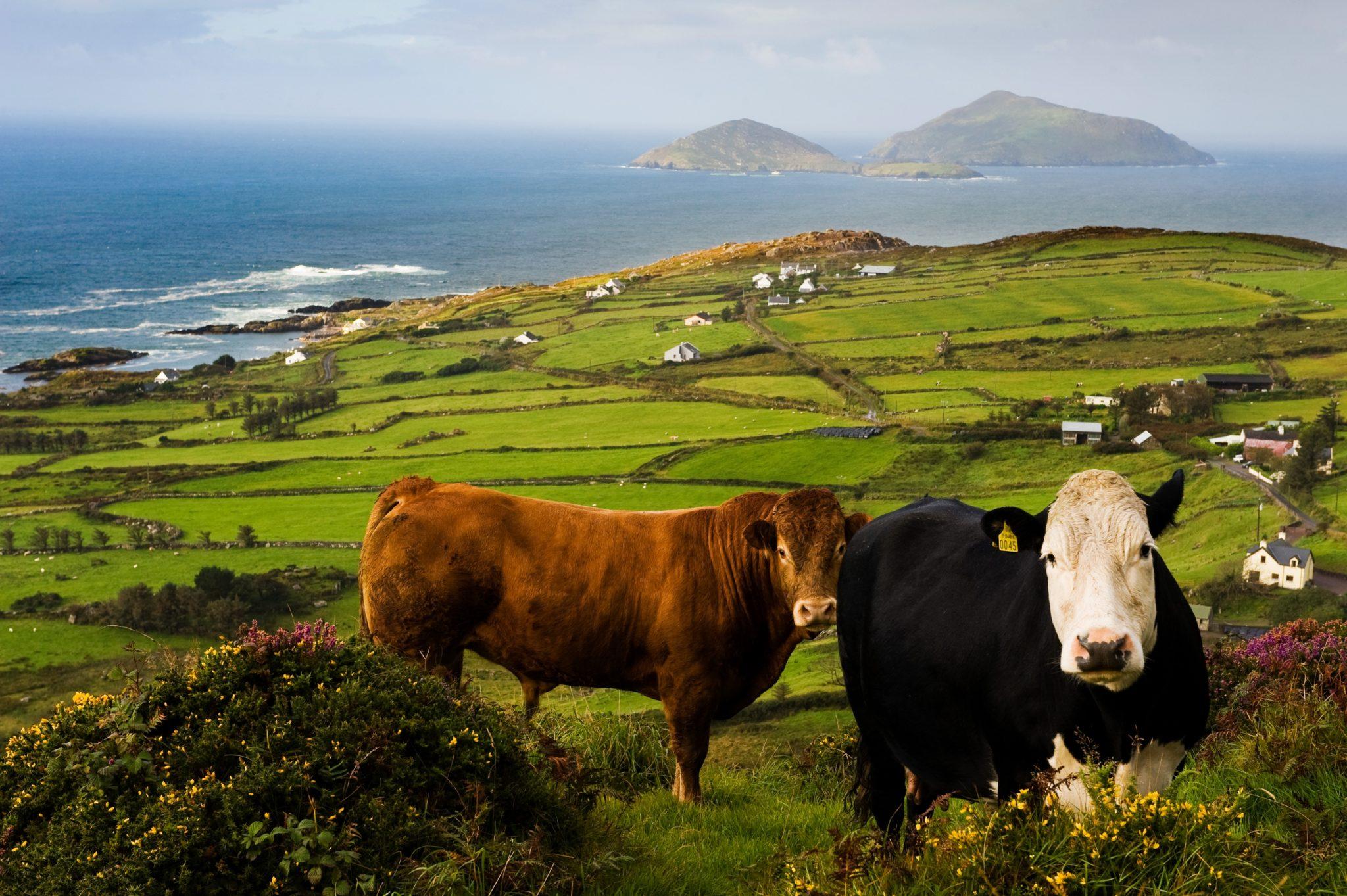 Tour Insights – Ireland & UK with Fiona Lake