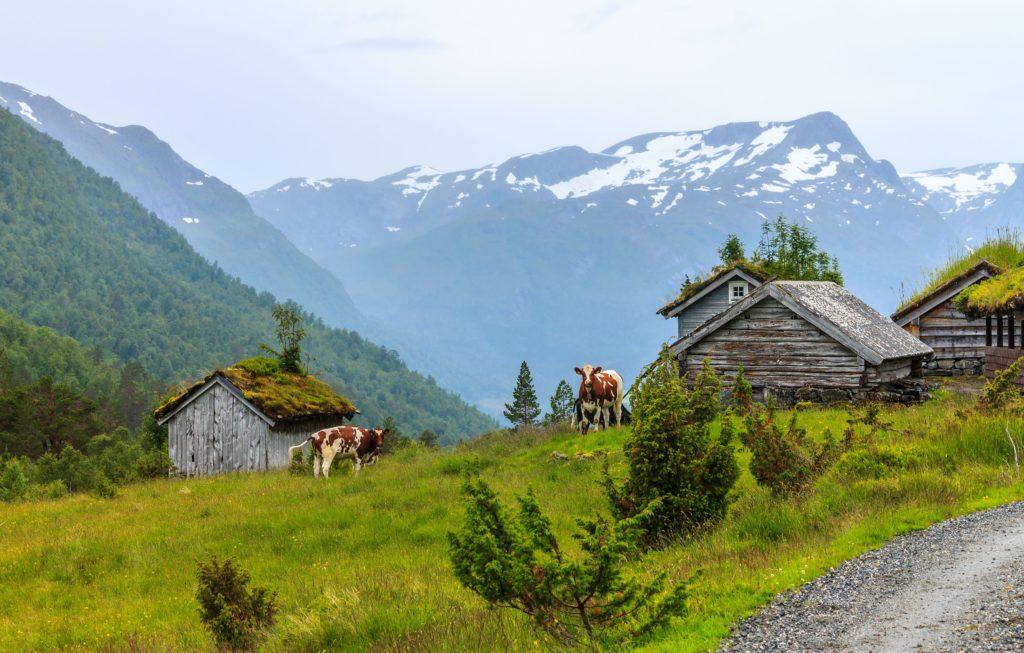 medjool dates bergen norway escorts