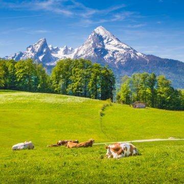 QUADRANT AUSTRALIA FARMING HIGHLIGHTS OF NORTHERN ITALY & SWITZERLAND