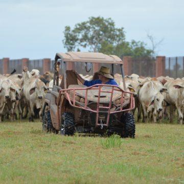 Quadrant Australia Top End Cattle & Cropping