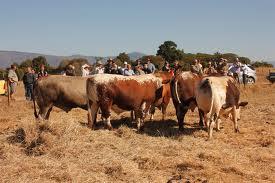Quadrant Australia Farming & Wildlife South Africa