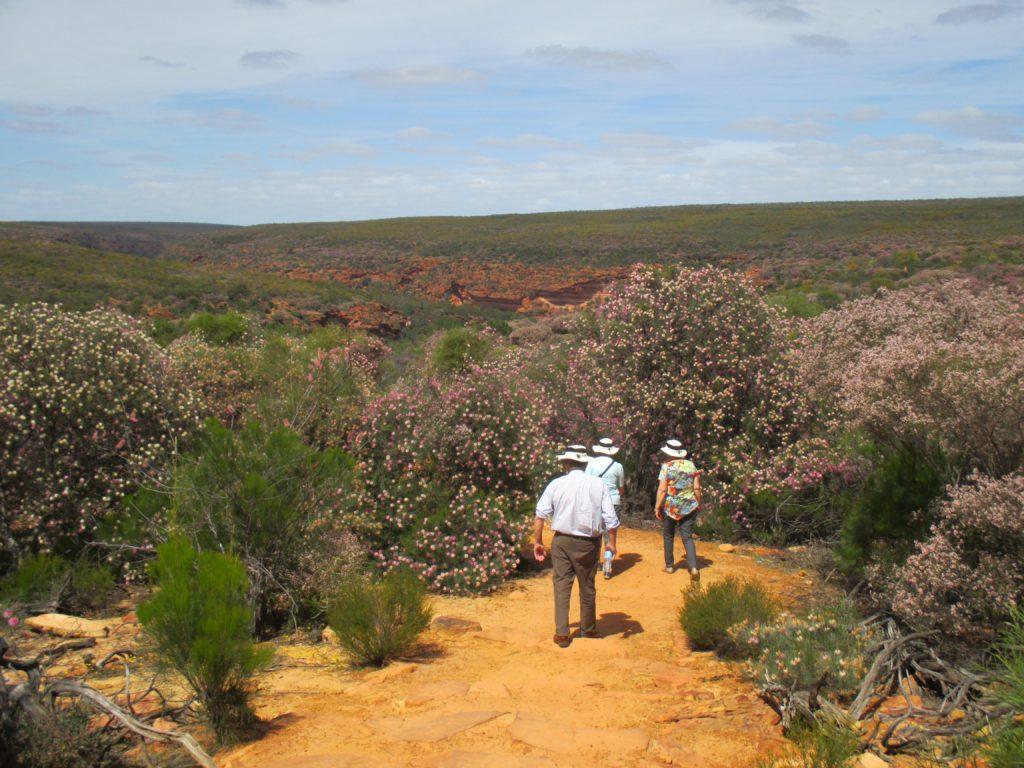 Quadrant-Australia-WA-Spring-Farming-Inspecting-Wildflowers-1024x768