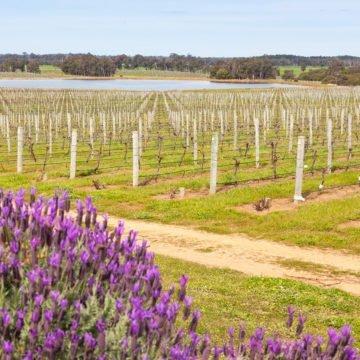 Quadrant Australia WA Spring Farming