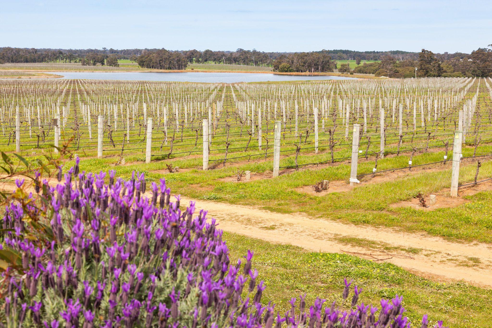 Explore Western Australia in Spring