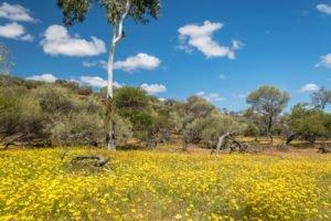 Quadrant-Australia-WA-Spring-Farming